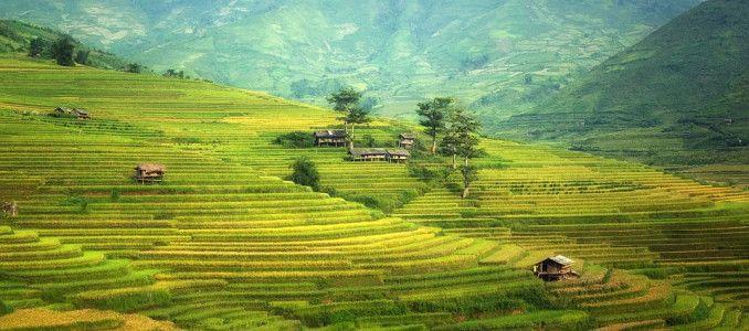 Basmati rice exports grow